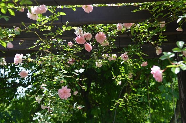 ガーデンコロボックル_c0124100_23395577.jpg