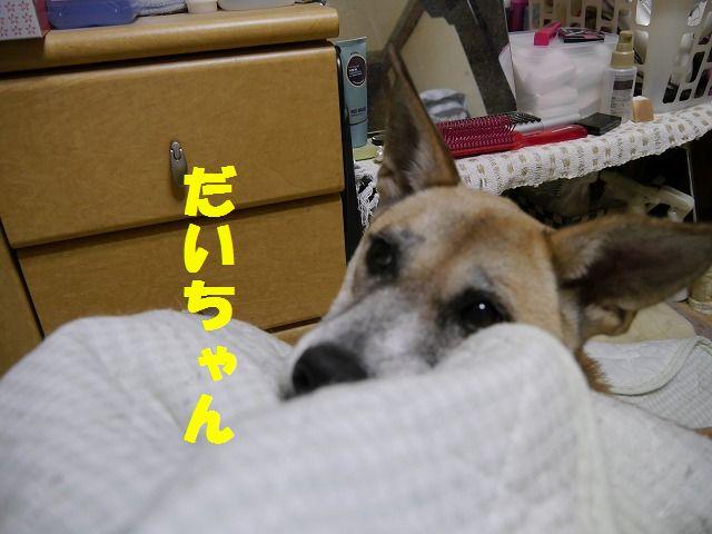 f0218911_13593515.jpg