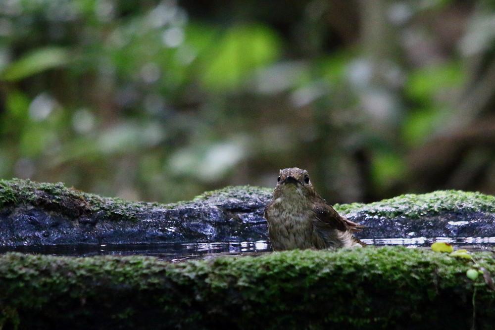 水場の鳥達(2014年6月14日)_f0235311_18193916.jpg