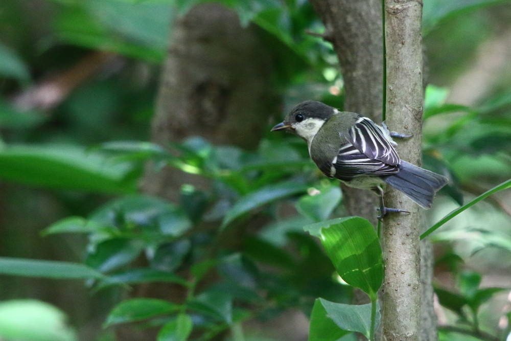 水場の鳥達(2014年6月14日)_f0235311_18231447.jpg