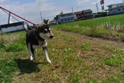 6/14 お散歩01_e0236430_15221464.jpg
