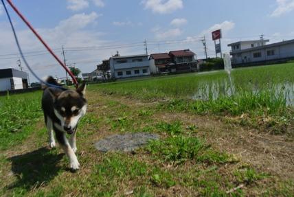 6/14 お散歩01_e0236430_15221667.jpg