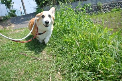 6/14 お散歩01_e0236430_15222546.jpg
