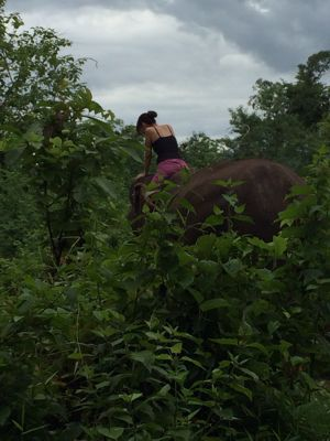 Elephant Ride !!_f0331651_02835.jpg