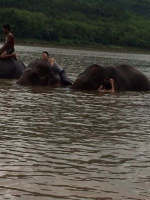 Elephant Ride !!_f0331651_0294.jpg