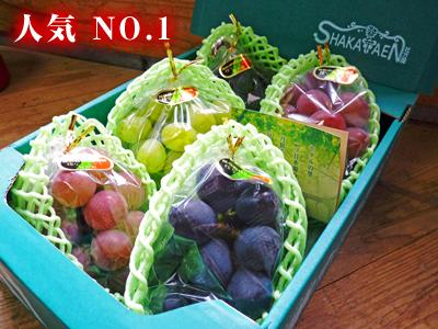熊本ぶどう 社方園 7月7日の販売スタートに向け、色付きを確認して袋をかけます_a0254656_1845441.jpg