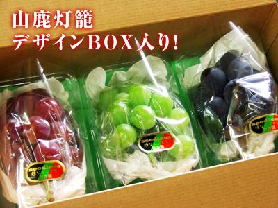 熊本ぶどう 社方園 7月7日の販売スタートに向け、色付きを確認して袋をかけます_a0254656_18504332.jpg