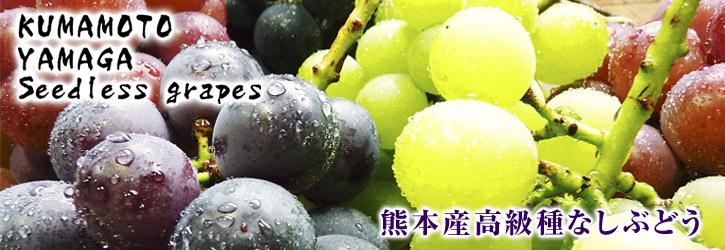 熊本ぶどう 社方園 7月7日の販売スタートに向け、色付きを確認して袋をかけます_a0254656_191656.jpg