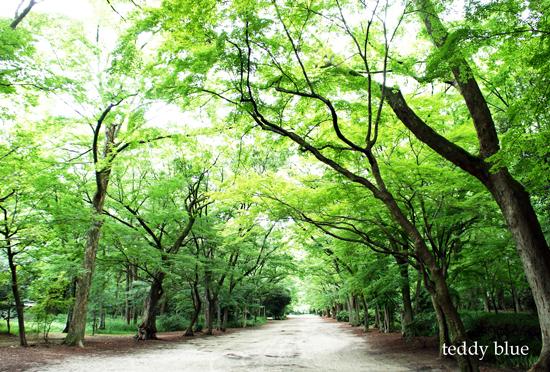 Kyoto trip Summer 2014  夏の京都旅 1_e0253364_1355794.jpg