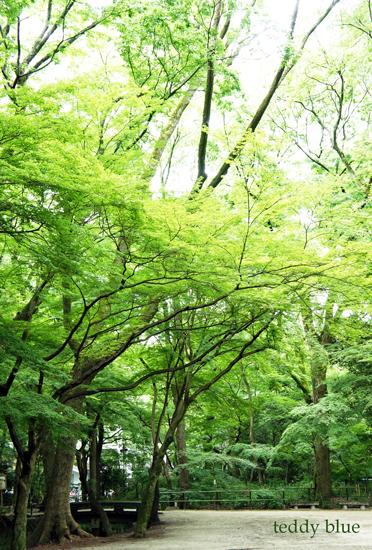 Kyoto trip Summer 2014  夏の京都旅 1_e0253364_1361012.jpg