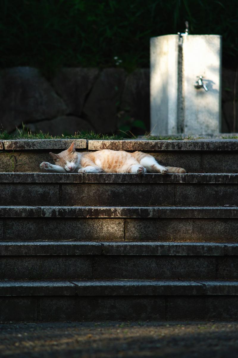 猫にゃん_f0021869_22412972.jpg