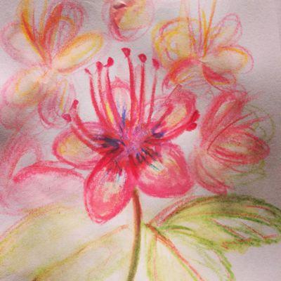 今日の花2_f0346986_17391476.jpg