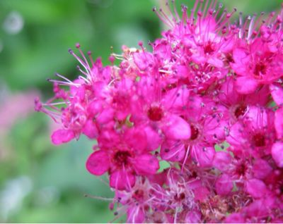 今日の花2_f0346986_1739165.jpg