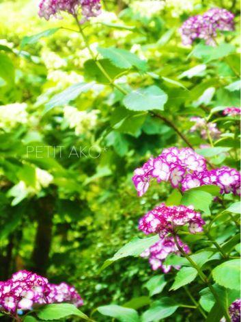 f0325188_20123864.jpg