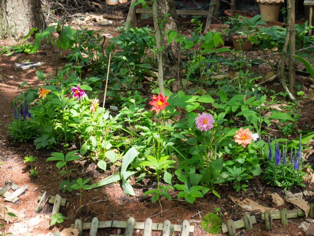 1週間振りの日差しを喜ぶ・・「新しい宿根草のガーデン」_f0276498_21343182.jpg