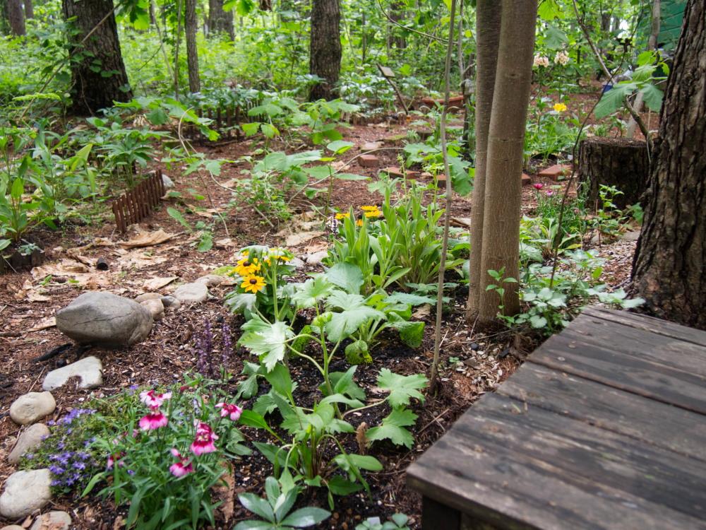 1週間振りの日差しを喜ぶ・・「新しい宿根草のガーデン」_f0276498_21363625.jpg
