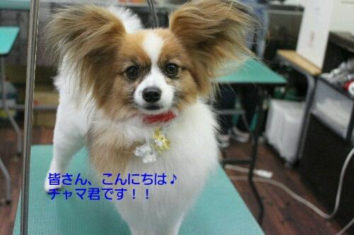 b0130018_01120100.jpg