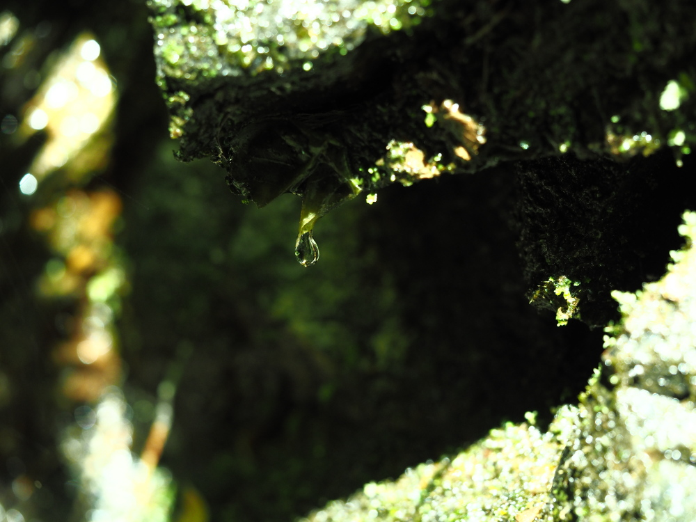 都下林道訪問 オオトラフコガネを探して_f0324026_18563474.jpg