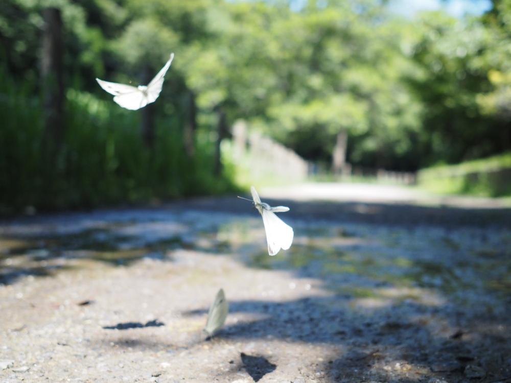いつもの自然公園でミドリシジミ観察_f0324026_19325266.jpg