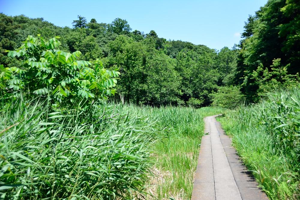 いつもの自然公園でミドリシジミ観察_f0324026_19352232.jpg