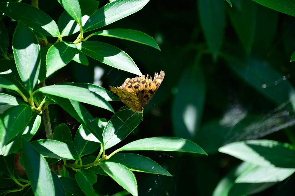 いつもの自然公園でミドリシジミ観察_f0324026_19363292.jpg