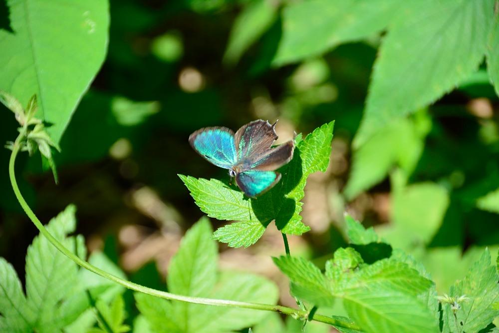 いつもの自然公園でミドリシジミ観察_f0324026_19394203.jpg