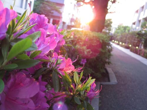 散歩帰りに娘がCanon「PowerShot N」で撮った写真(わたしのお気に入り)_c0060143_23343219.jpg