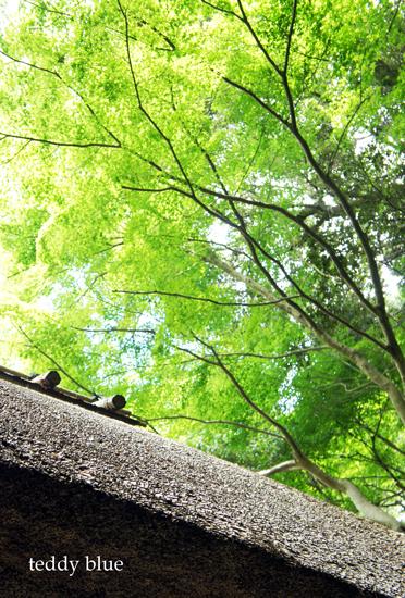 Kyoto trip Summer 2014  夏の京都旅 2 _e0253364_11431440.jpg