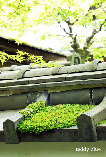 Kyoto trip Summer 2014  夏の京都旅 3 _e0253364_23552461.jpg