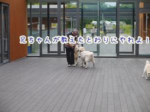 f0321567_14222041.jpg