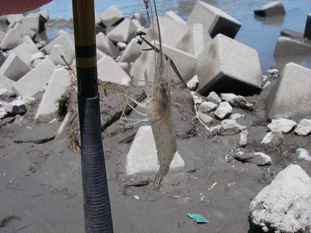 2014、テナガエビ釣りの二回目、ハゼ釣りの一回目_a0074069_2340328.jpg