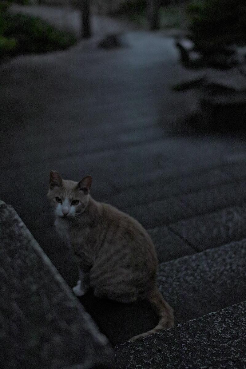 猫にゃん_f0021869_23321387.jpg