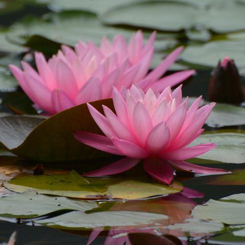 極楽寺 蛇の池の睡蓮_f0099102_19572478.jpg