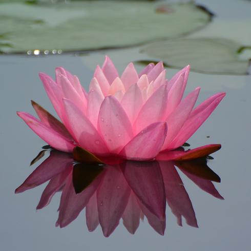 極楽寺 蛇の池の睡蓮_f0099102_19574082.jpg