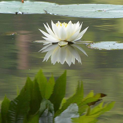 極楽寺 蛇の池の睡蓮_f0099102_19582987.jpg