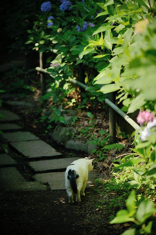 空梅雨の紫陽花巡り! 藤森神社_f0032011_1829564.jpg