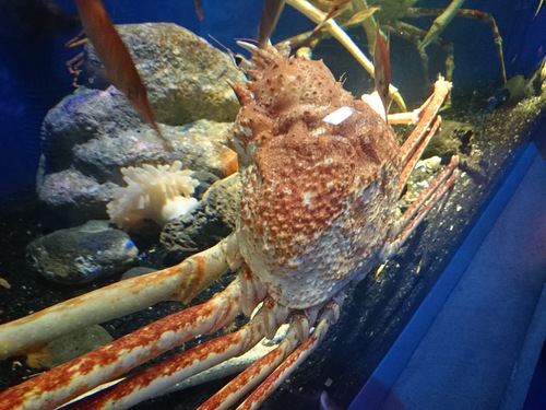 沼津港深海水族館のコンセプトをこの地域にも_c0010936_0305929.jpg
