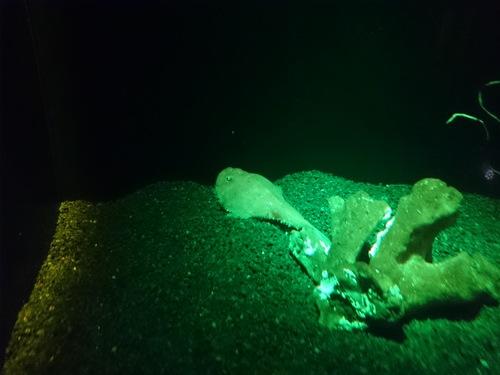 沼津港深海水族館のコンセプトをこの地域にも_c0010936_034847.jpg
