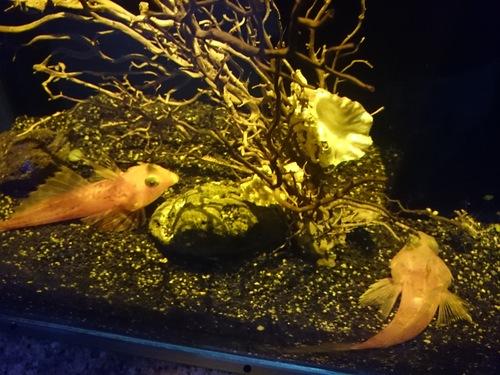 沼津港深海水族館のコンセプトをこの地域にも_c0010936_0531744.jpg