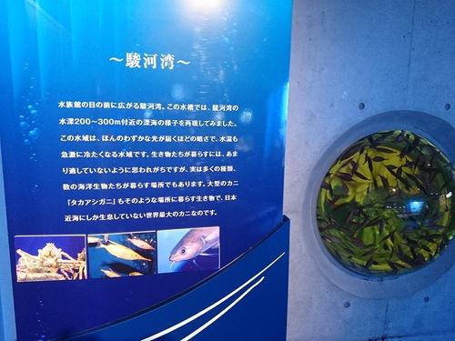 沼津港深海水族館のコンセプトをこの地域にも_c0010936_1115833.jpg