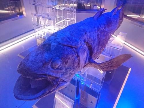 沼津港深海水族館のコンセプトをこの地域にも_c0010936_112176.jpg