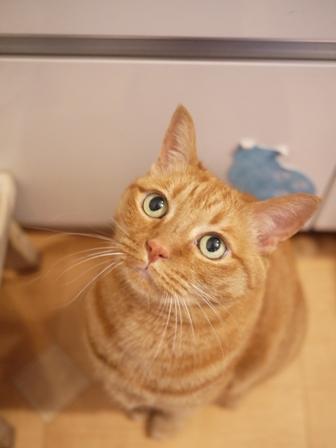 お誕生日猫 しぇる11歳編。_a0143140_0293982.jpg