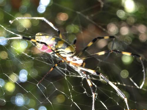 人体蜘蛛の巣説_b0084241_20161824.png