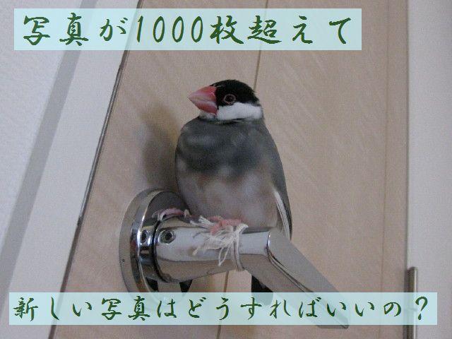 b0158061_2238099.jpg
