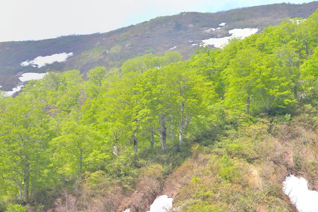 新緑の月山(2)5月27日撮影_b0223668_88236.jpg