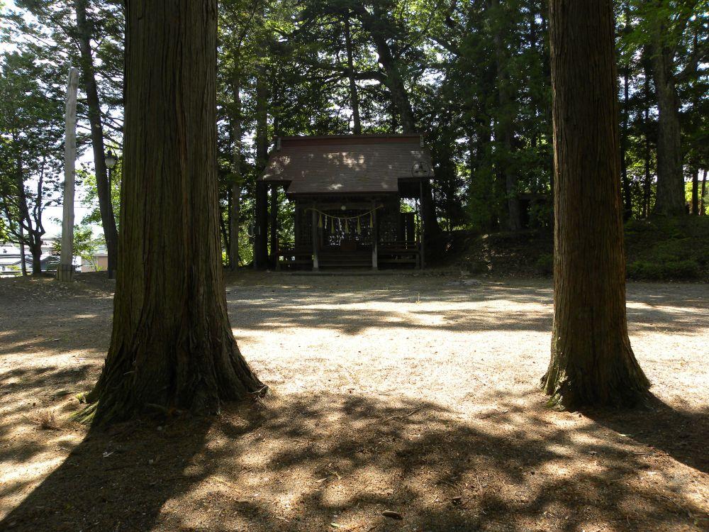 白山神社の大柏_b0329588_17182409.jpg