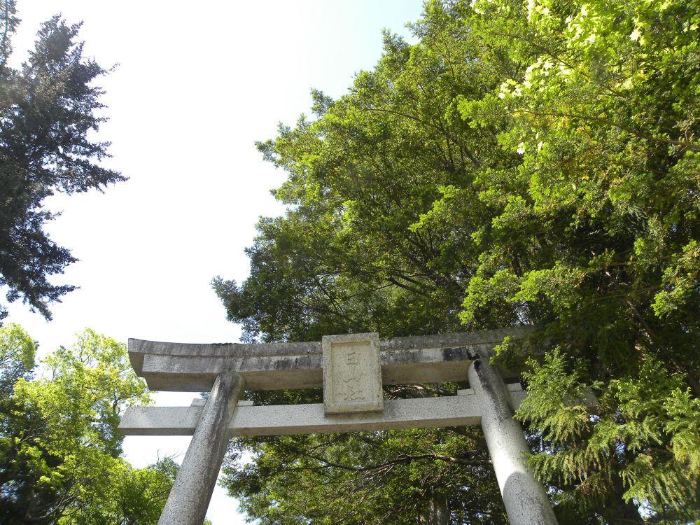 白山神社の大柏_b0329588_17183904.jpg