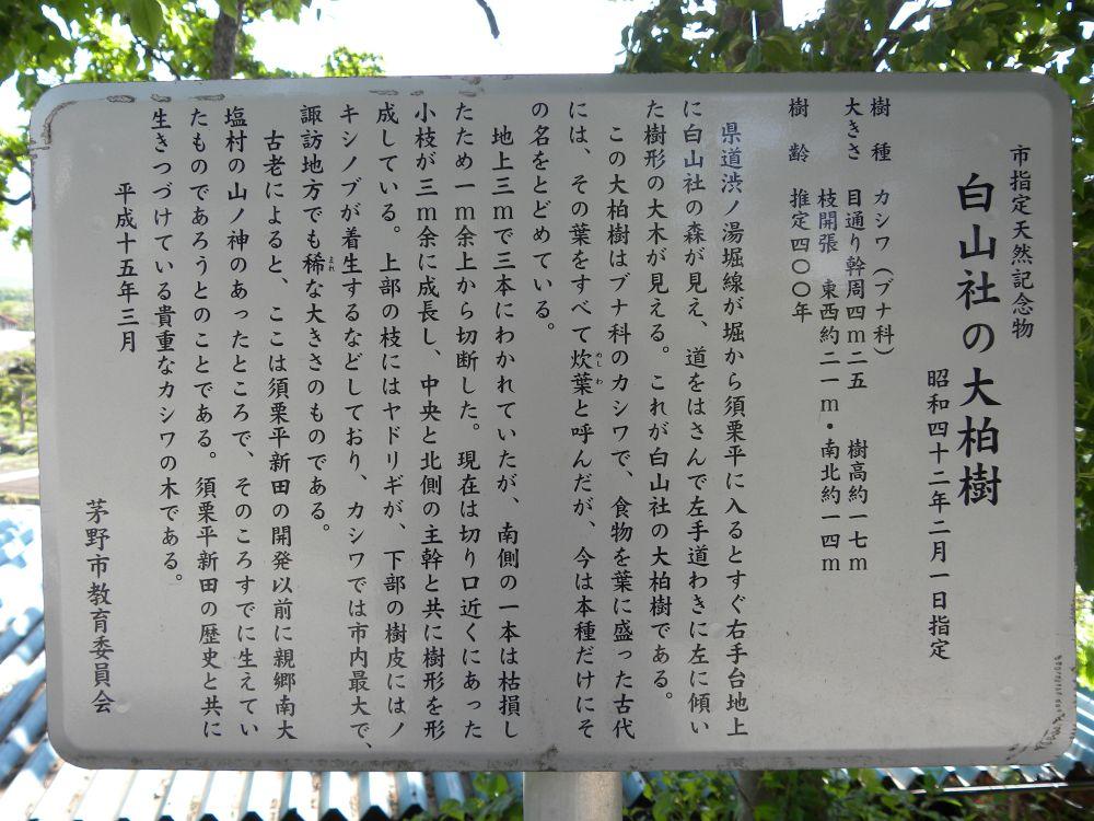 白山神社の大柏_b0329588_17190755.jpg