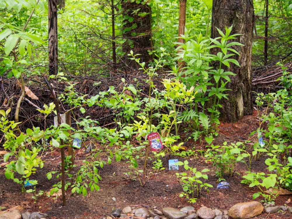 """こりすちゃんも注目!今年、新しく植えた""""ブルーベリー""""の庭_f0276498_23095114.jpg"""