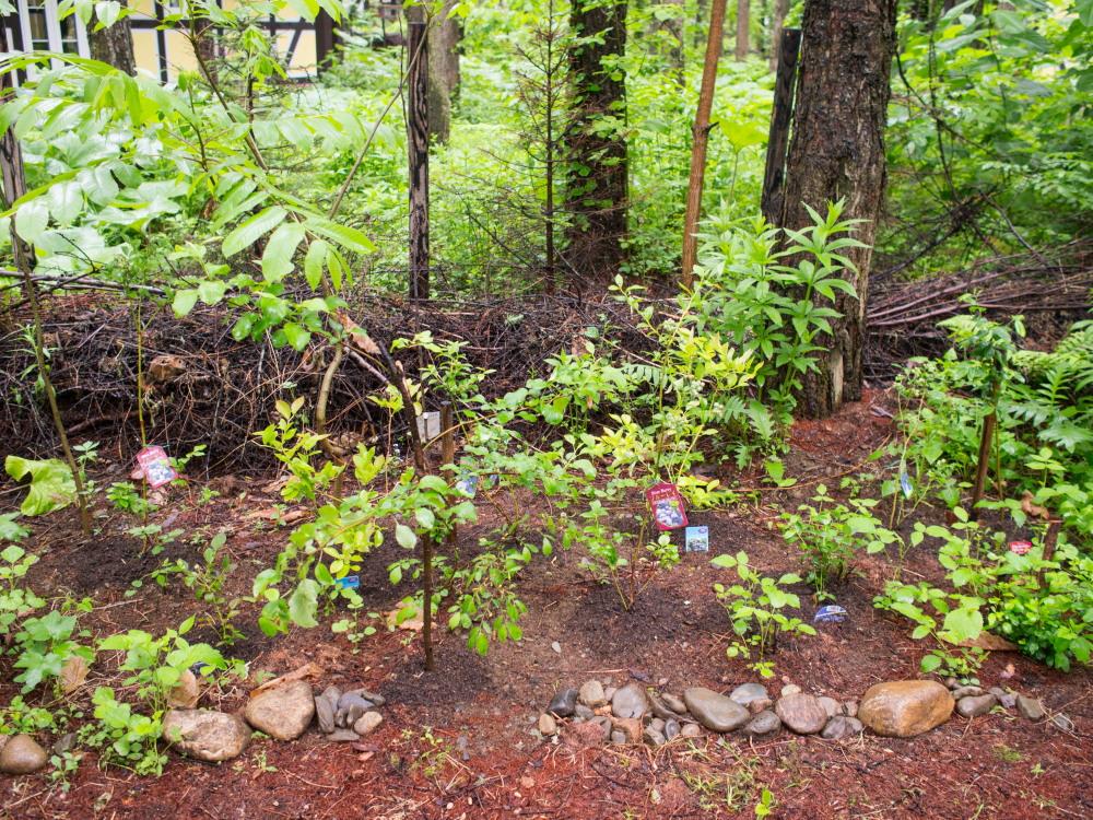 """こりすちゃんも注目!今年、新しく植えた""""ブルーベリー""""の庭_f0276498_23101961.jpg"""